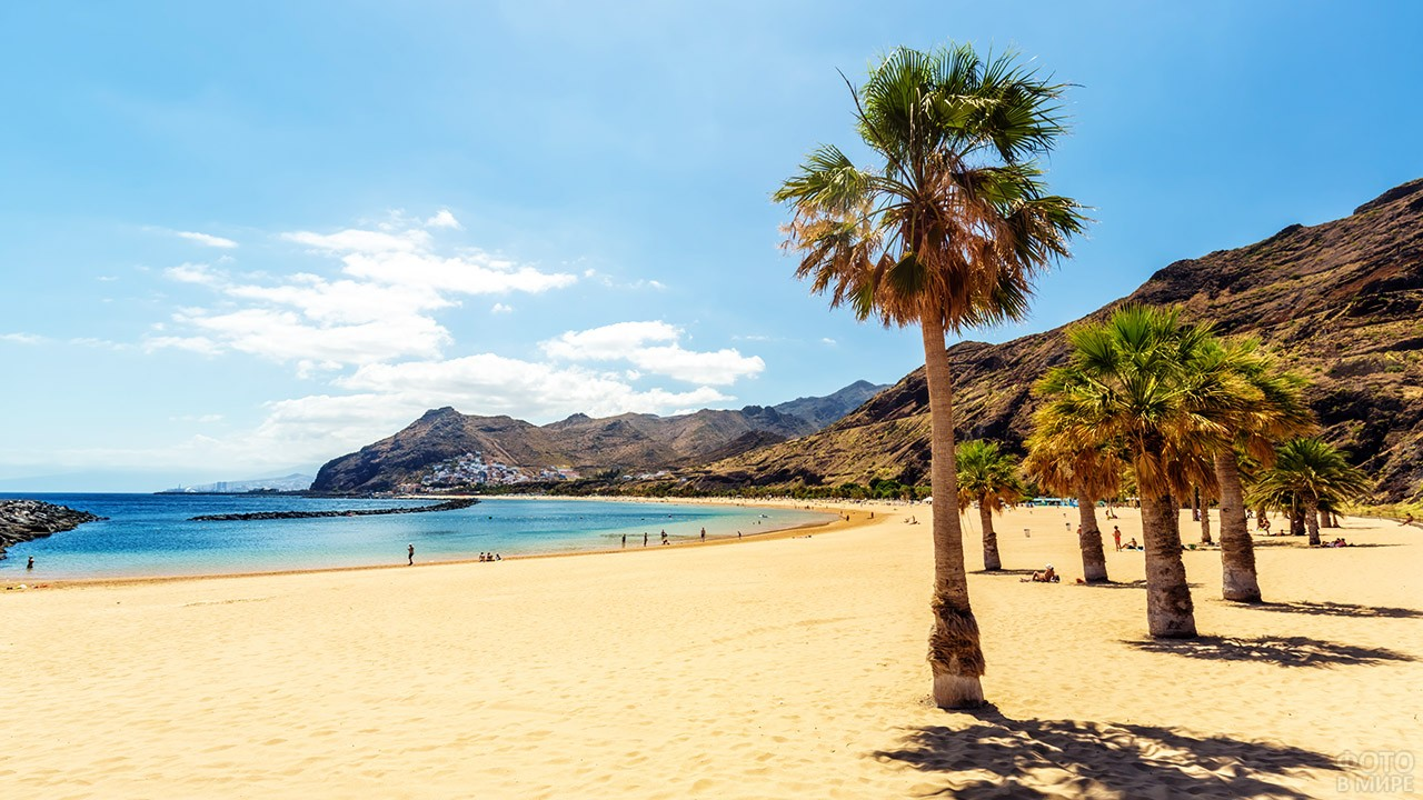 Пальмы на пляже Тереситас