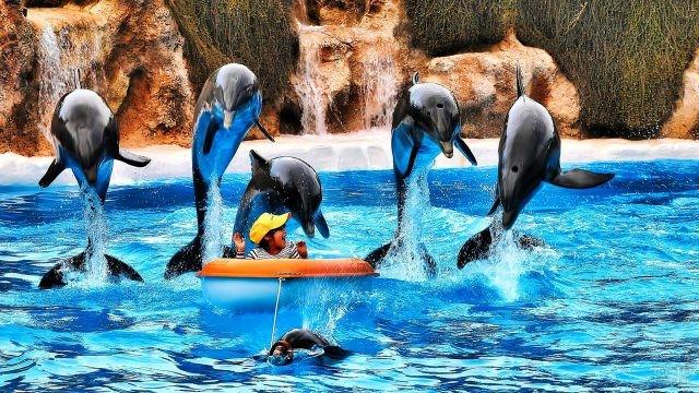 Шоу дельфинов в зоологическом парке Лоро-парк