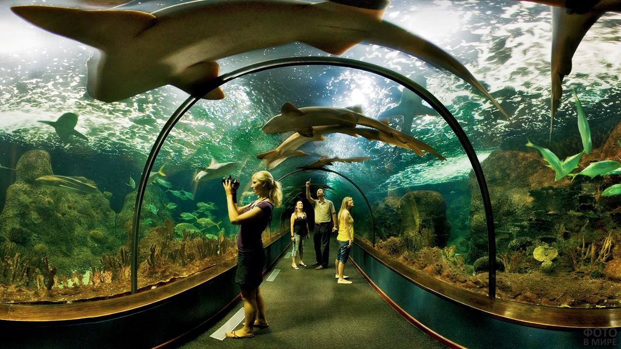Туристы в океанариуме зоологического парка Лоро-парк