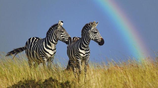 Две зебры стоят на фоне радуги