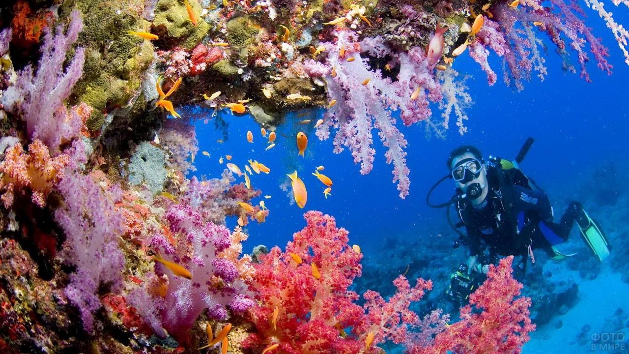 Коралловые рифы Индийского океана