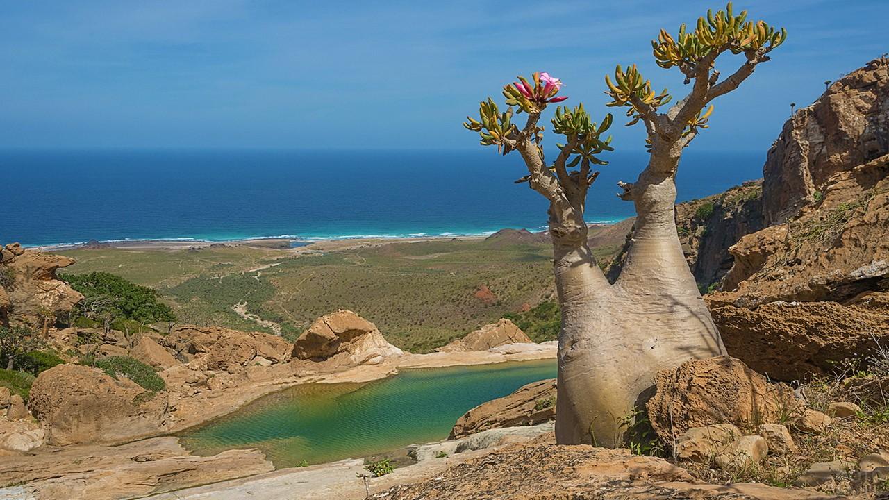 Необычное дерево на камнях