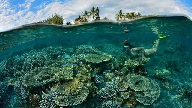 Подводный мир острова Реюньон