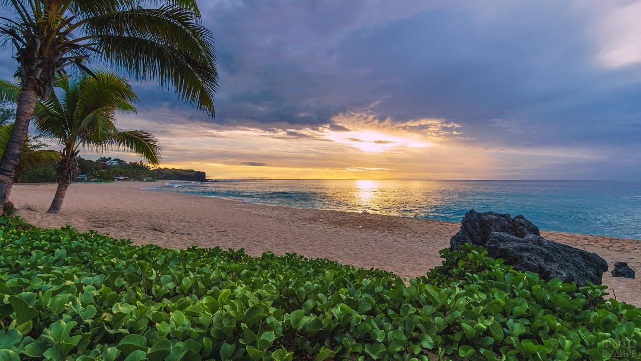 Растительность на песчаном пляже