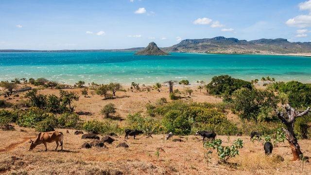 Животные на берегу Мадагаскара