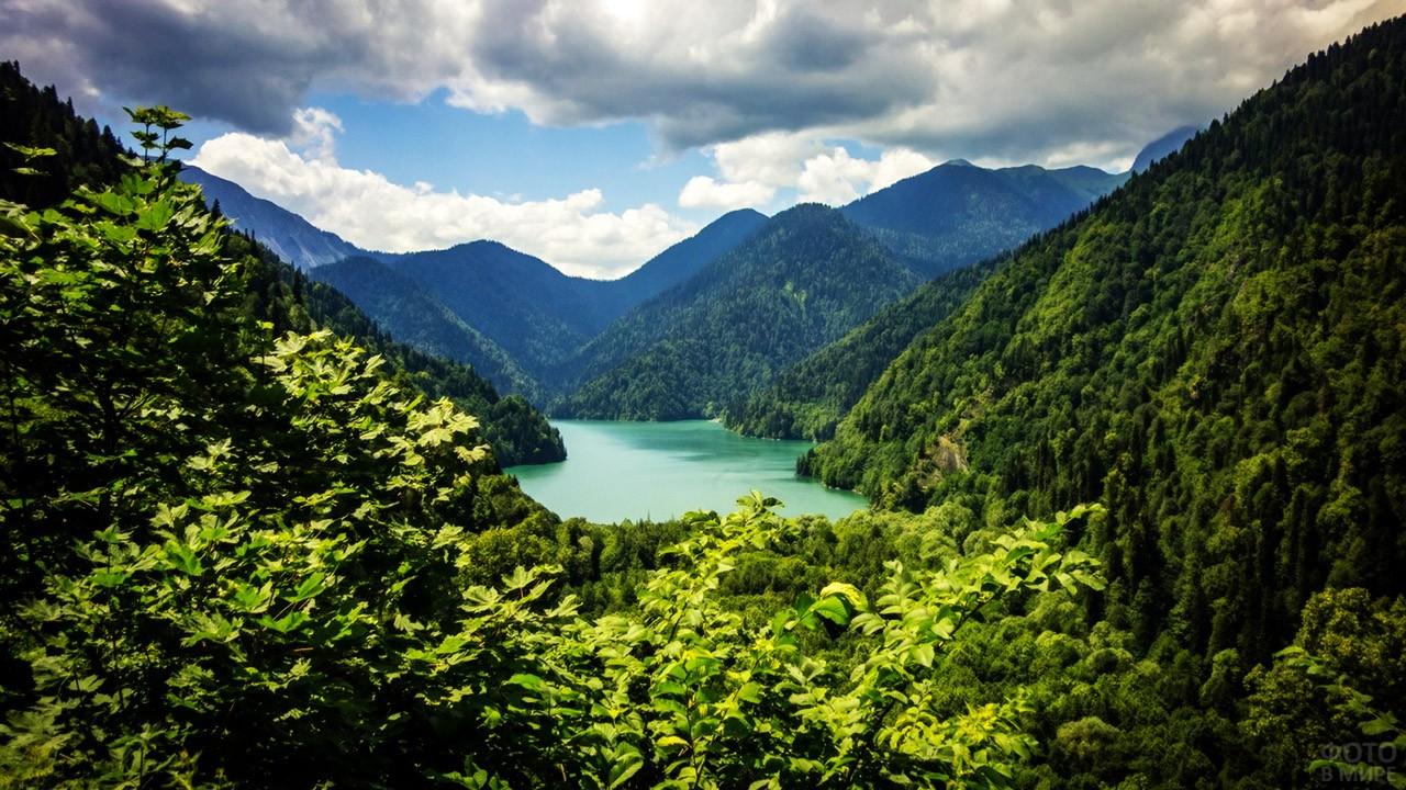 Пышная зелень на холмах