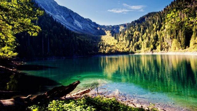Залитый солнцем лес на берегу озера