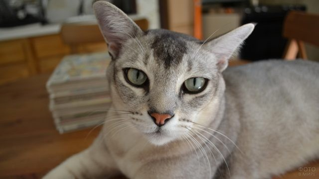 Красивая кошка на столе