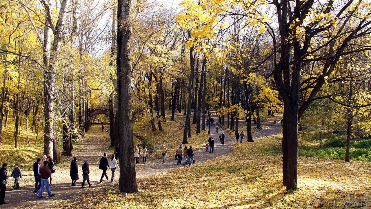 Осенний ковёр из листьев под ногами гуляющих