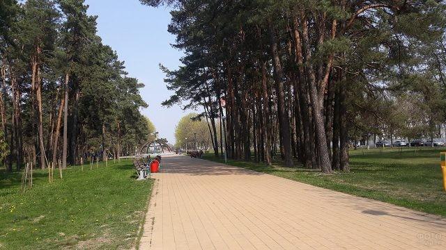 Тенистая аллея в весеннем парке