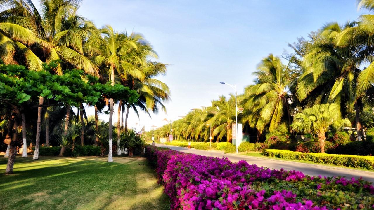 Цветущая пальмовая аллея
