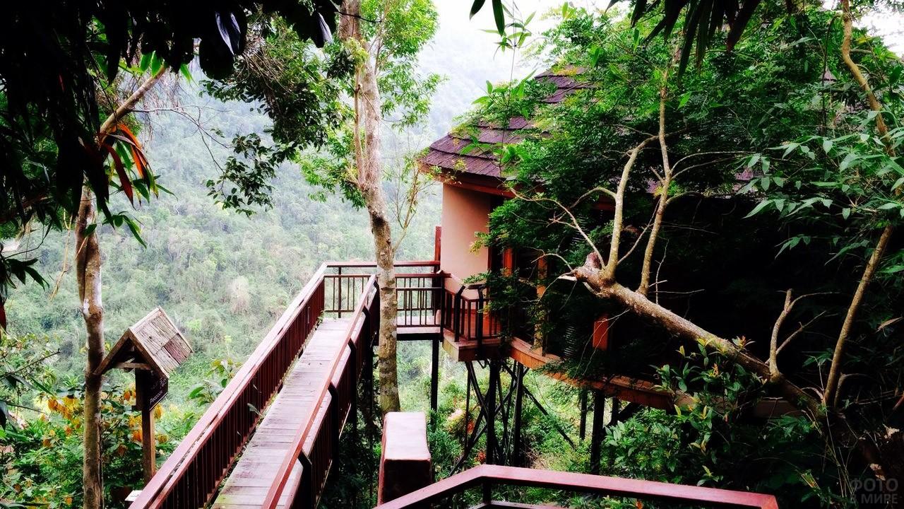 Дом на дереве в парке Янода
