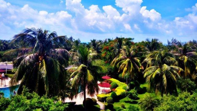 Пышная тропическая зелень