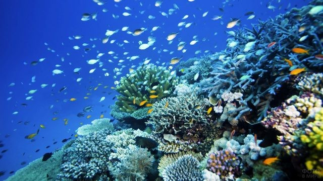 Флора Большого Барьерного рифа
