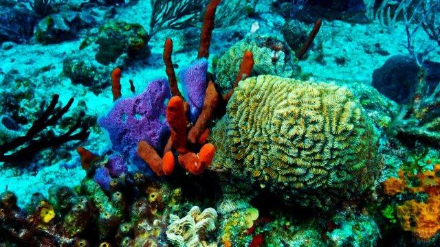 Красочные обитатели коралловых рифов