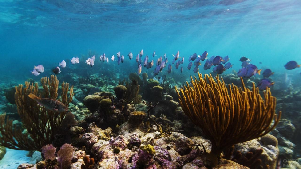 Стая рыбок среди кораллов