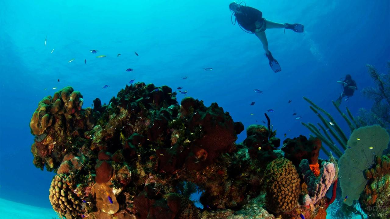 Туристы разглядывают флору коралловых рифов