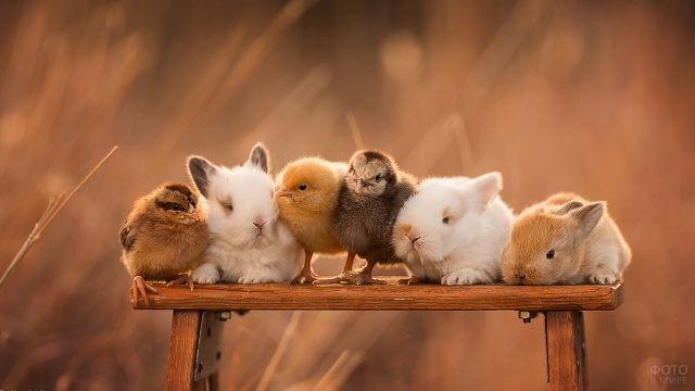 Цыплята сидят на лавке в окружении кроликов