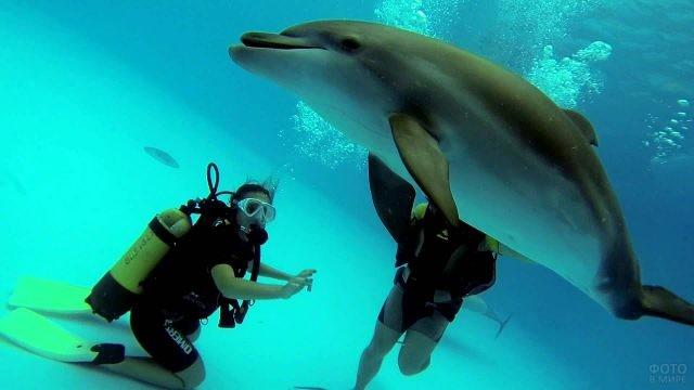 Аквалангисты любуются дельфином