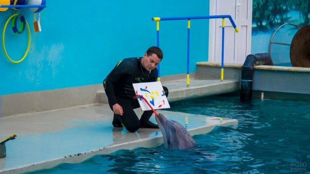 Дельфин делает мазки на листе