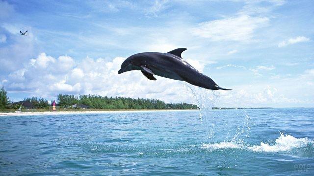 Дельфин делает прыжок над гладью моря