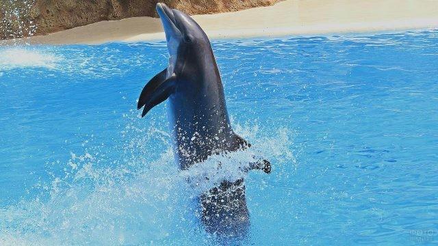 Дельфин делает стойку