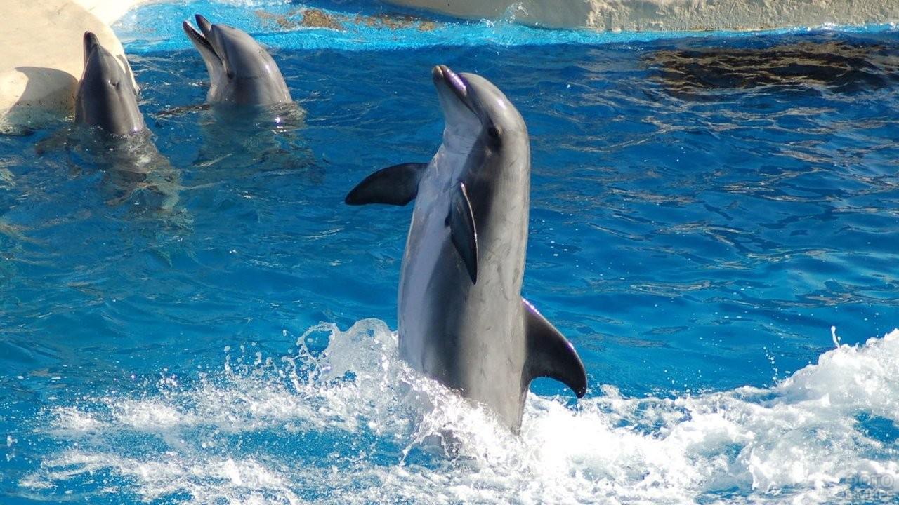 Дельфин делает трюк