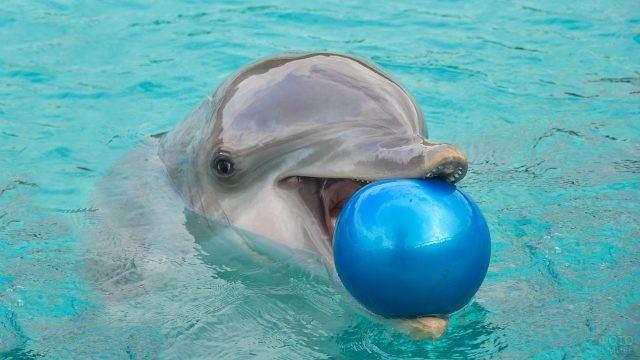 Дельфин держит во рту мяч
