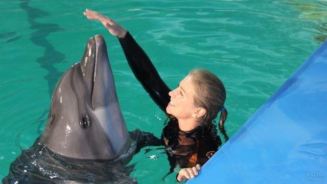 Дельфин дотягивается до руки девушки