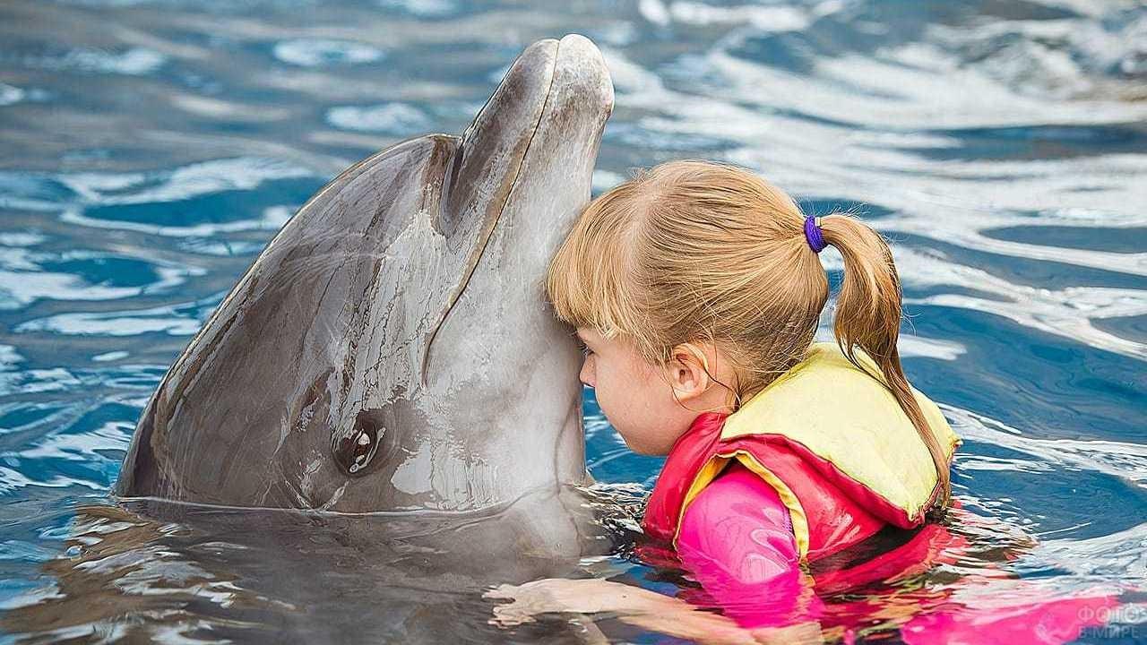 Дельфин играет с девочкой