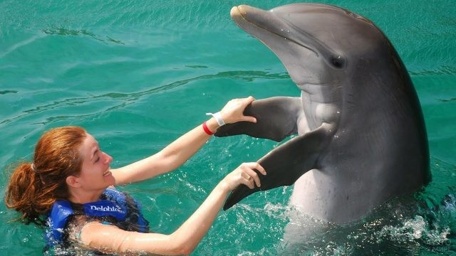 Дельфин кружится в танце
