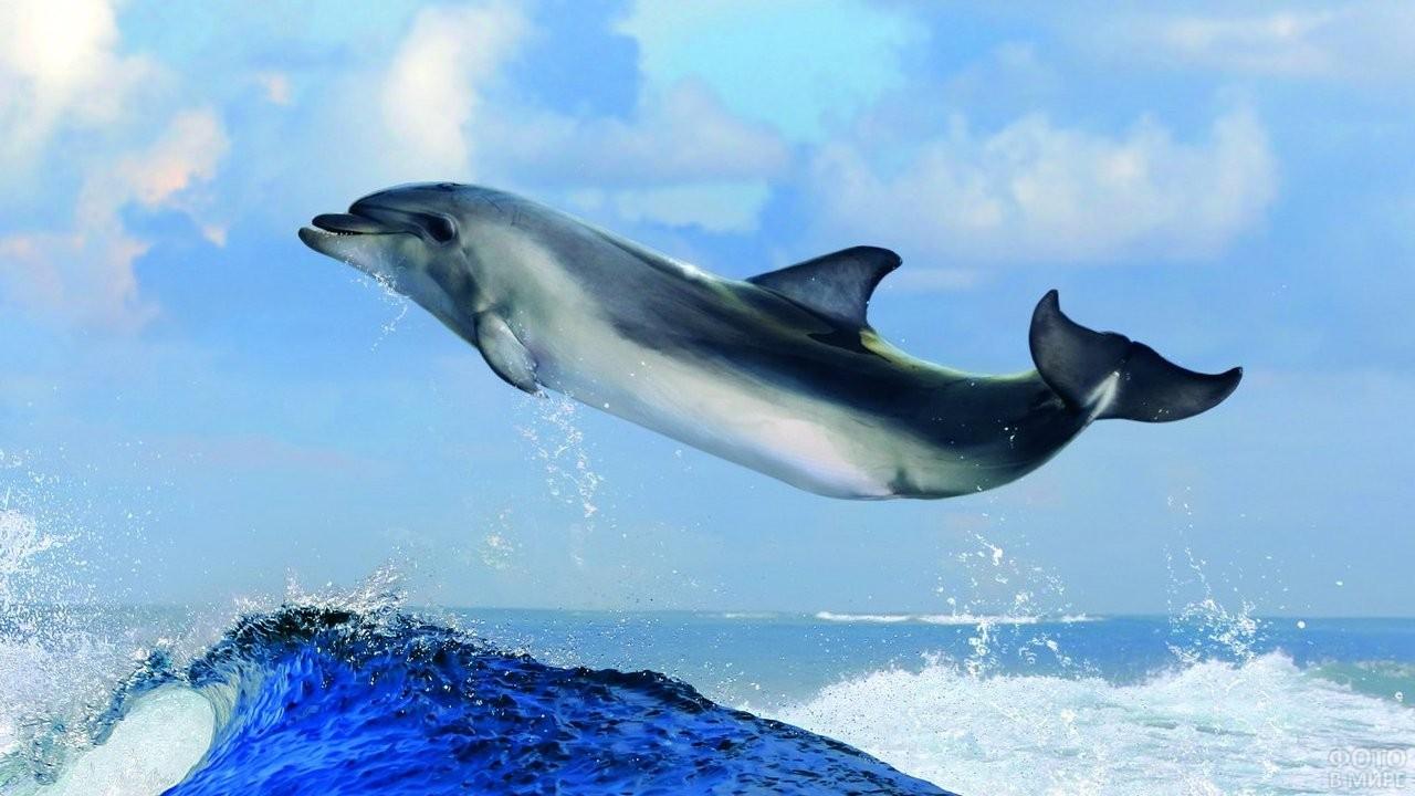 Дельфин летит над океаном
