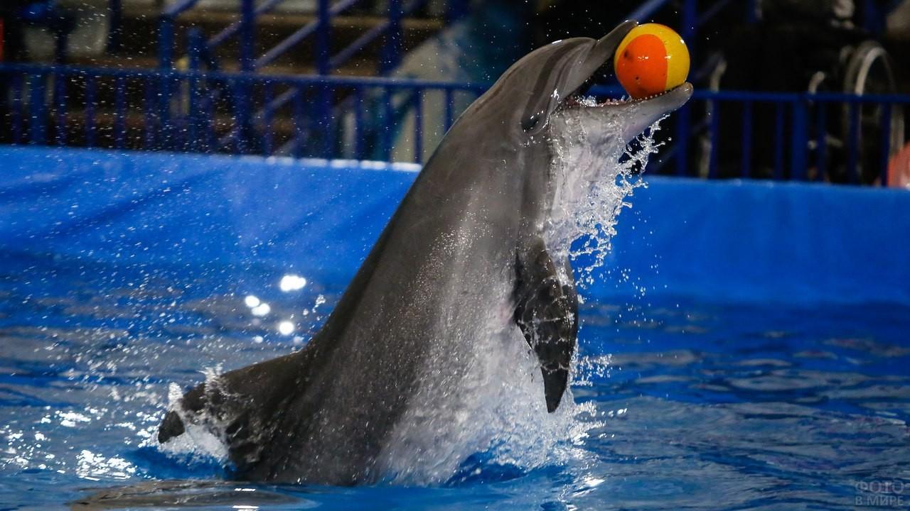 Дельфин ловит мяч