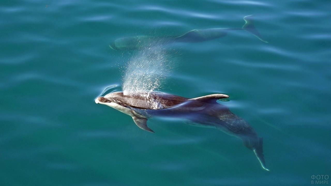 Дельфин выпускает фонтанчик