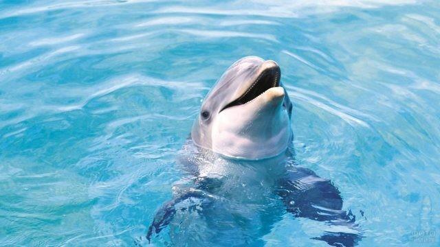 Дельфин высовывает голову из воды