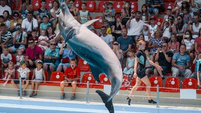Дельфин выступает перед зрителями