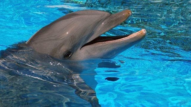 Дельфин высунул голову из воды