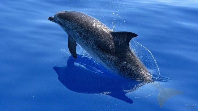 Дельфин высунулся из воды