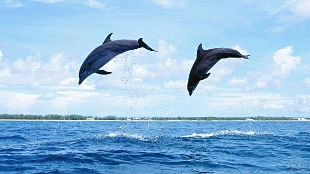 Дельфины делают красивый прыжок