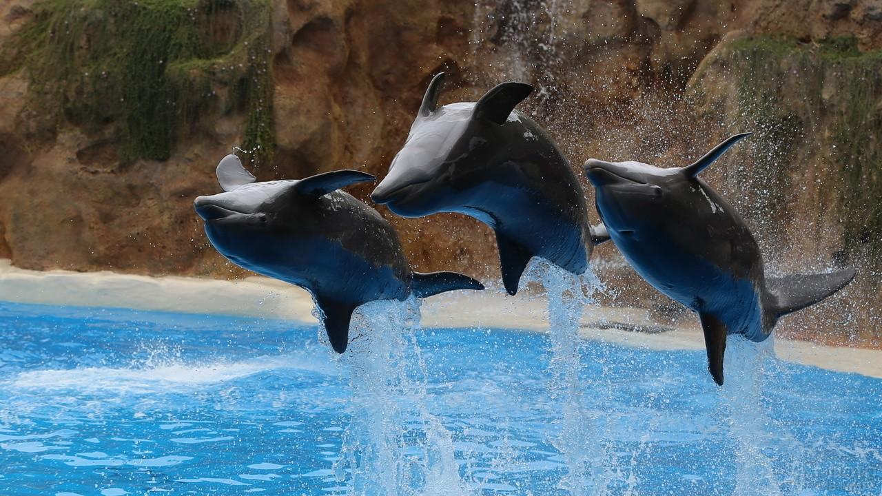 Дельфины делают кульбиты