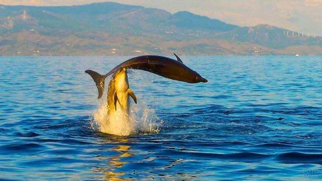 Дельфины делают трюки с поддержкой