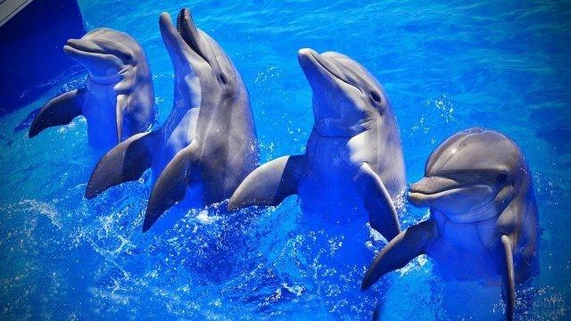 Дельфины исполняют танец