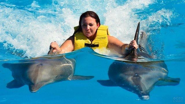 Дельфины катают девушку