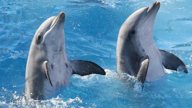 Дельфины обожают играть