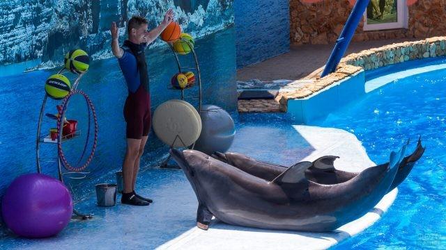 Дельфины ожидают команду