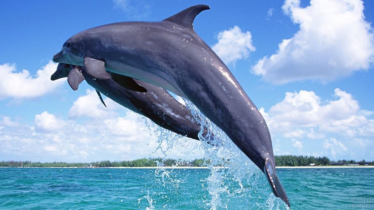 Дельфины парят в воздухе