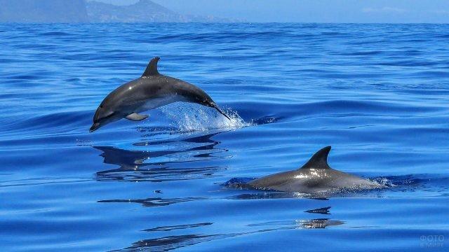 Дельфины плавают парами
