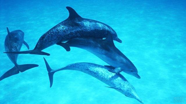 Дельфины плавают в толще воды