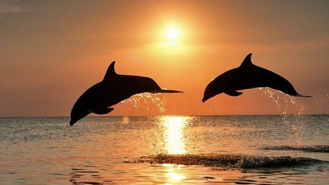 Дельфины прыгают на закате дня