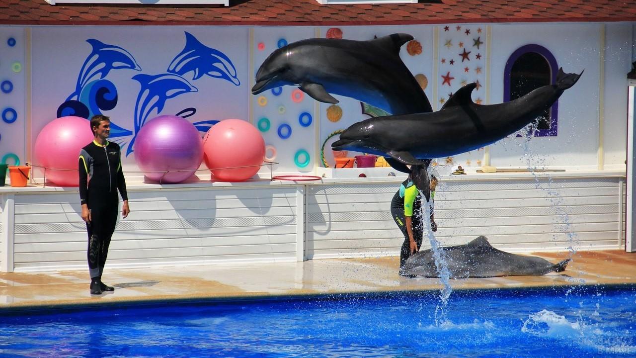 Дельфины репетируют перед выступлением